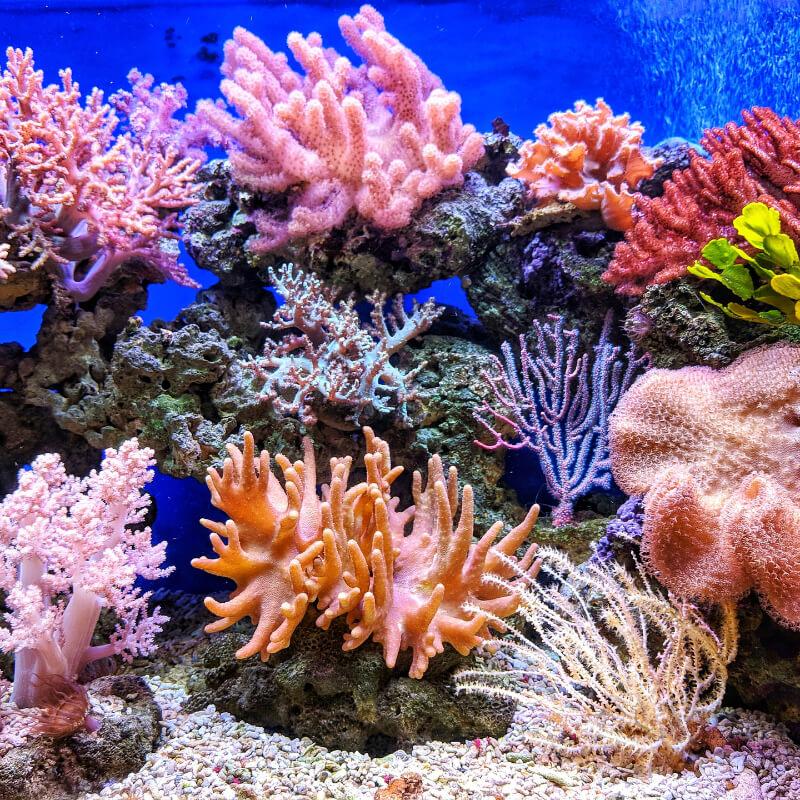 Amazonský korálový útes
